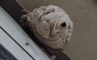 destruction de nid de guêpes et frelons