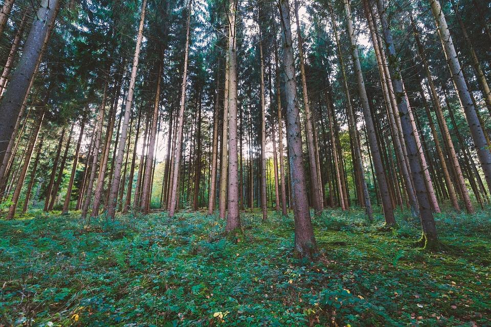 L'éco-responsabilité dans la lutte contre les nuisibles, une discipline et une attention au quotidien
